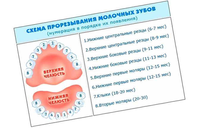 Они идут! все, что нужно знать родителям о прорезывании зубов у детей