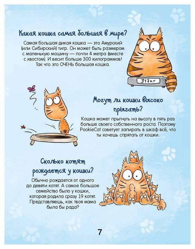 Почему мурлыкают кошки когда их гладишь: как это происходит и откуда издаётся звук