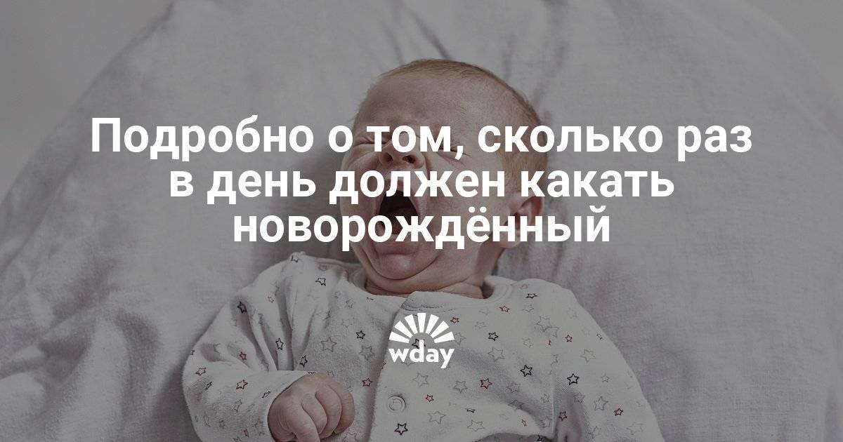 Сколько раз в сутки должен какать новорожденный?