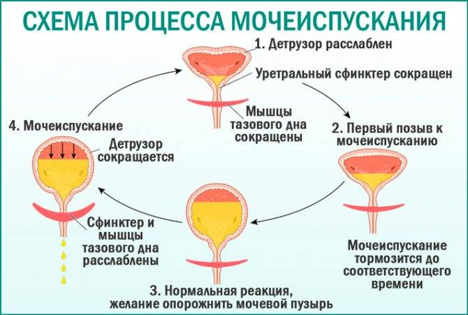 Симптомы и лечение острого и хронического пиелонефрита – напоправку – напоправку
