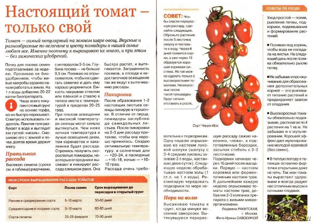 С какого возраста можно давать ребенку помидоры и в каком виде