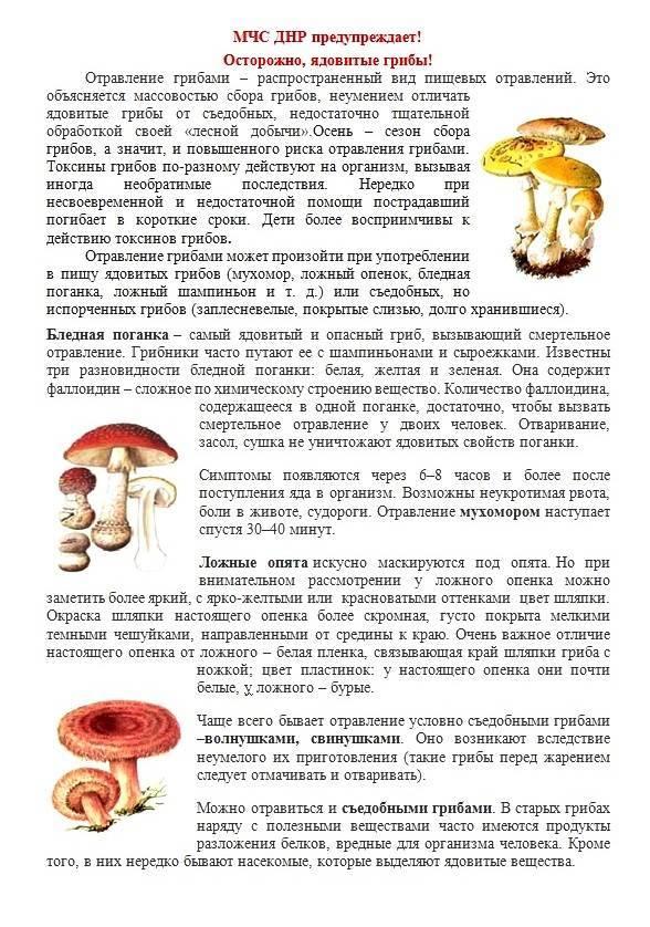 Можно ли грибной суп ребенку 2 года