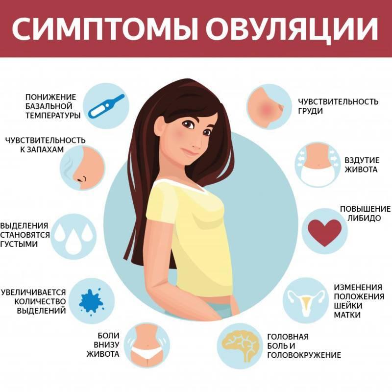 Признаки и ощущения овуляции у женщины