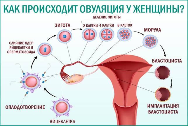 Ановуляция - причины, диагностика и лечение