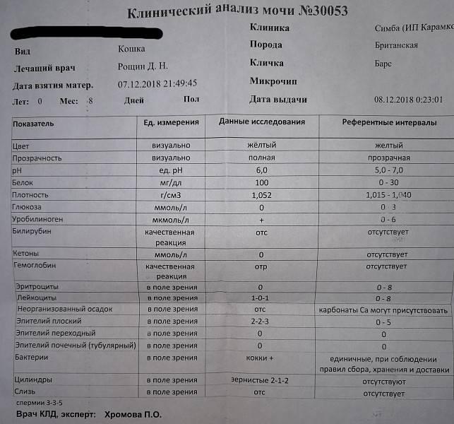 Анализ мочи у ребенка: расшифровка, норма у детей, таблица, как сдать анализ