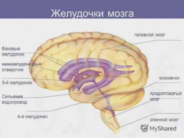 Как замедлить возрастные изменения мозга? - форма