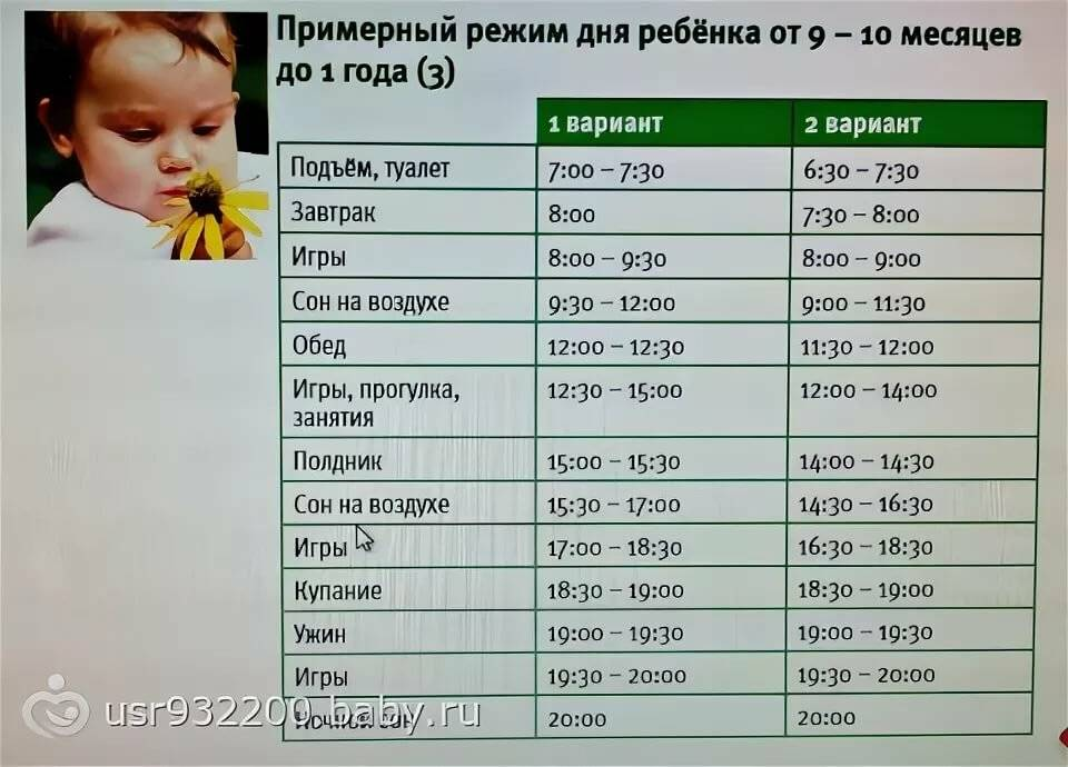 Режим дня ребенка в 9 месяцев: сон, питание, советы доктора комаровского