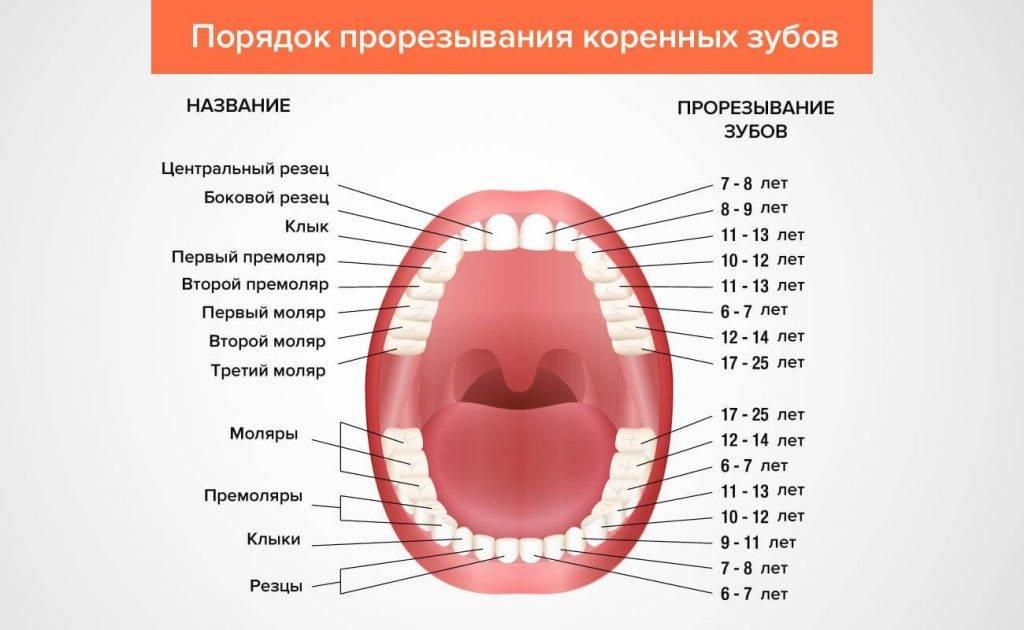 Реставрация молочных зубов: способы реставрации молочных зубов у детей