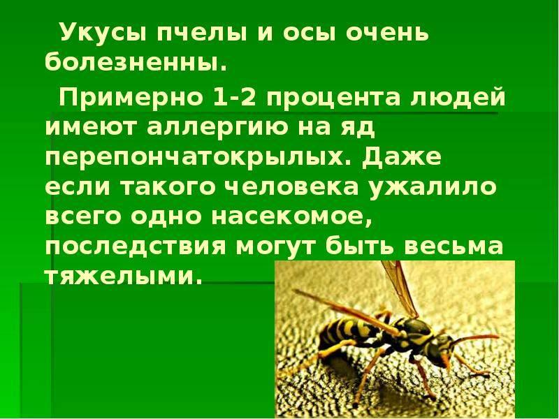7 лайфхаков против летних насекомых