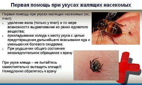 Оказание первой помощи при укусах насекомых: клещи, пчелы, осы, шершни