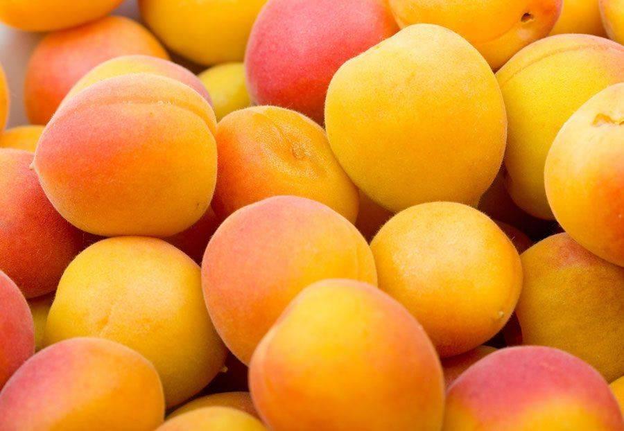 Можно абрикосы при беременности и вскармливании – чем опасны эти фрукты? абрикосы кормящим мамам – полезны или нет