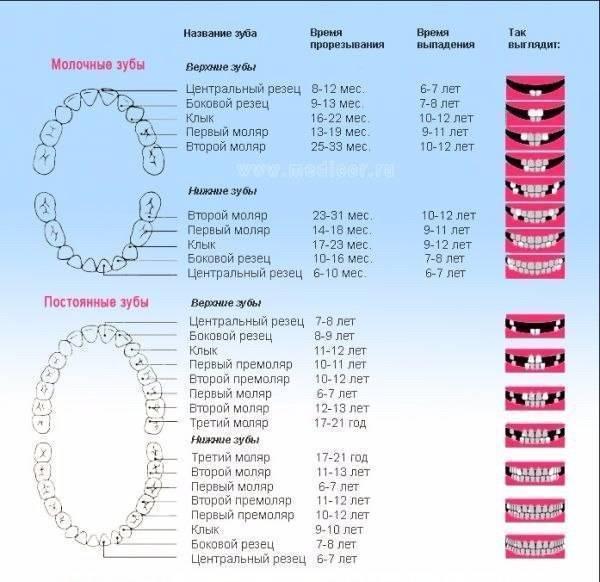Топ 12 мифов о детской стоматологии | молочные зубы можно не лечить?