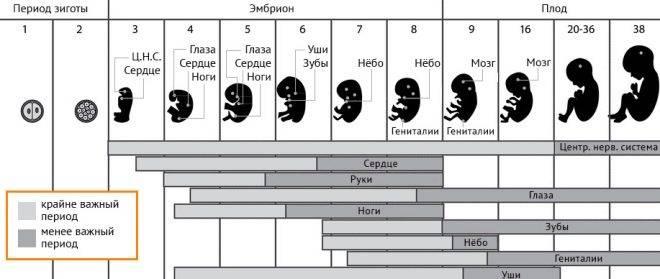 Патологии внутриутробного роста и развития плода в фетальный период