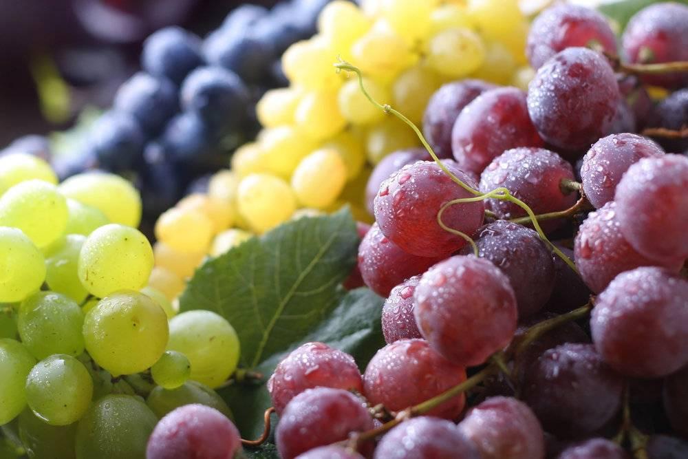 Виноград при грудном вскармливании новорожденных - можно или нет