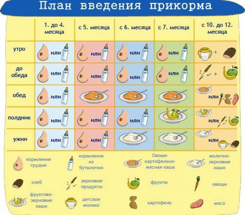 Mojdoc - первый прикорм при грудном вскармливании - схема с 6 мес