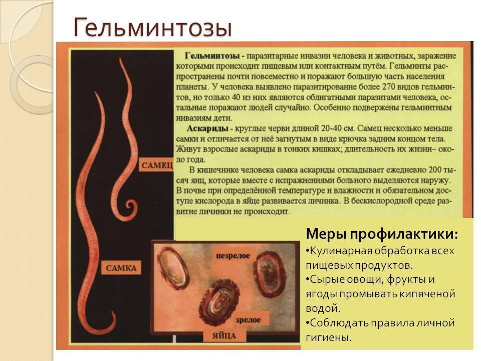 Глисты у детей: симптомы и лечение гельминтоза