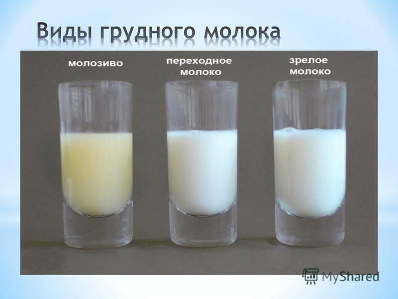 Прикорм и питание для правильного грудного вскармливания