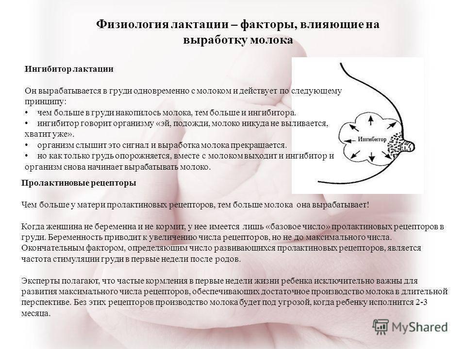 Как повысить лактацию: техника выполнения массажа груди и меры предосторожности