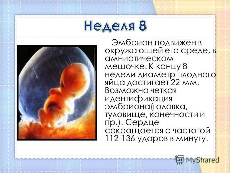 8 неделя беременности (62 фото): что происходит с малышом и мамой на 7-8 акушерской неделе, развитие эмбриона – как выглядит и ощущения, размер матки и секс, болит поясница