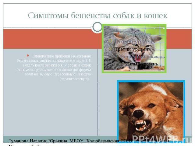 Помощь при укусе собаки