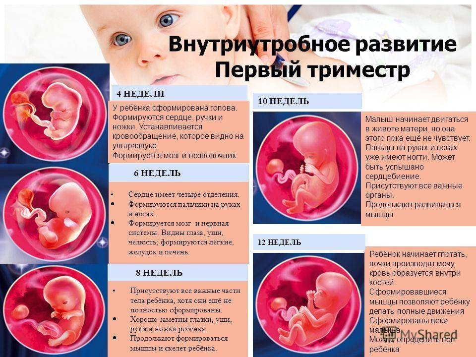 4 неделя беременности: признаки и ощущения женщины, симптомы, развитие плода