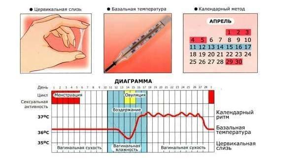 Ановуляторный цикл – отсутствие овуляции | университетская клиника