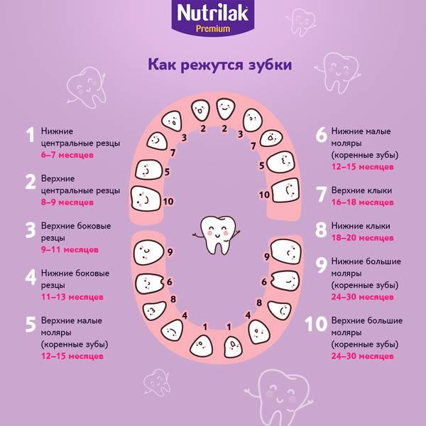 Детское развитие: когда режутся первые зубки и сколько их должно появиться