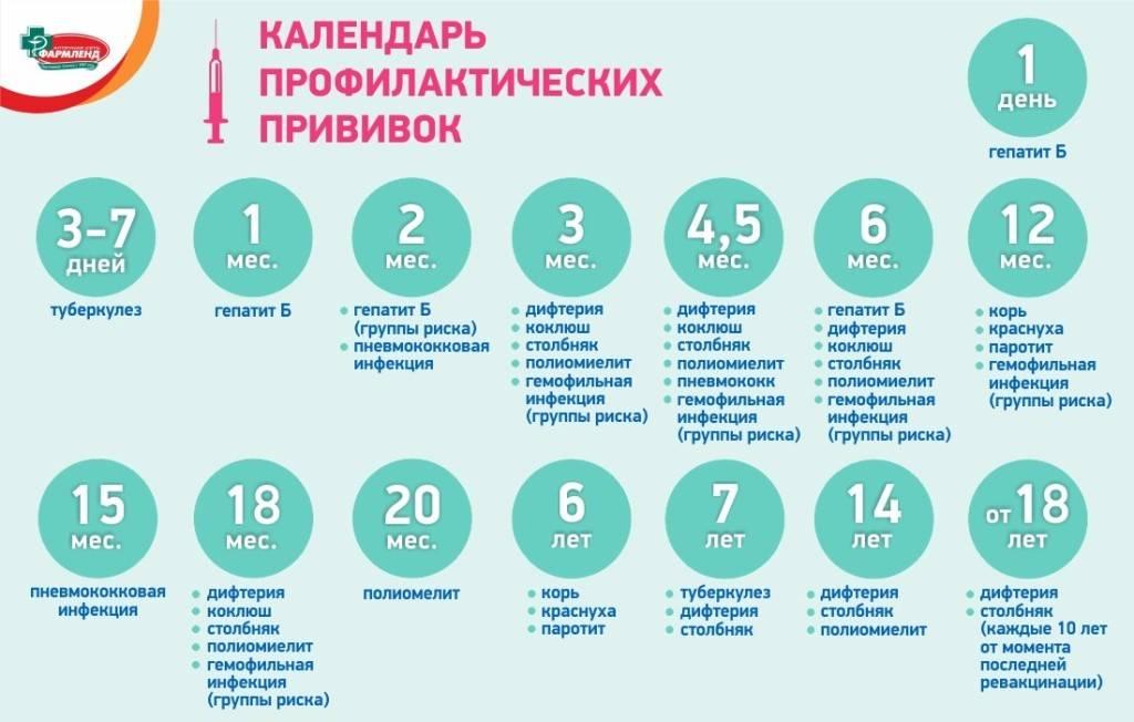 Календарь прививок детям до 1 года (в россии) – график