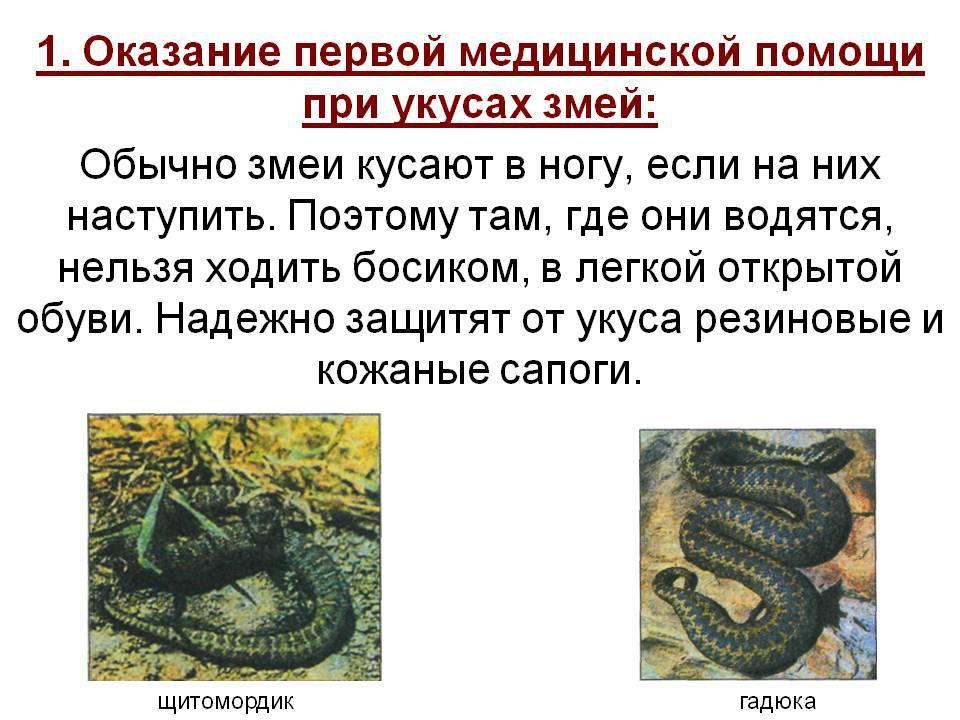 Первая помощь при укусах насекомых, змей, животных