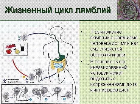 Лечение лямблиоза