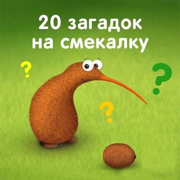 25 хитрых загадок на смекалку: сможете их решить, не заглядывая в ответы?