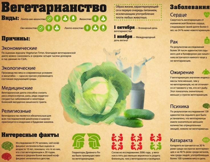 Вегетарианство с точки зрения медицины: плюсы и минусы | образ жизни для хорошего здоровья