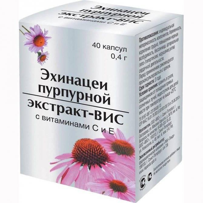 Эхинацея — лекарственные свойства и применение