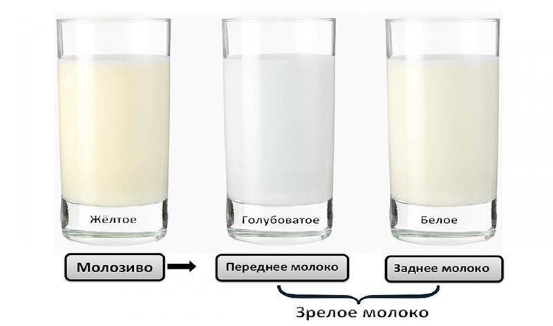 Становление грудного вскармливания. приход молока, приливы - проблемы гв