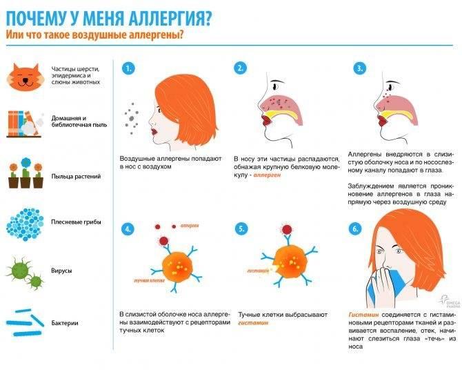 Современные аспекты терапии аллергического ринита у детей » библиотека врача