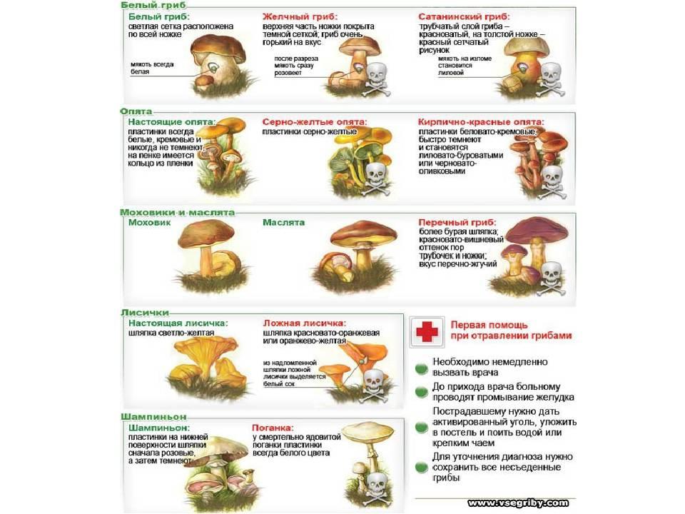 Можно ли ребенку грибной суп в 1 год imother.su- все для будущей мамы