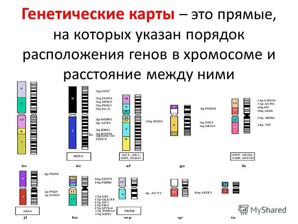 """Хромосомные патологии – риск развития   клиника """"центр эко"""" в москве"""