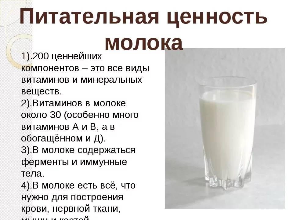 Молочный белок: что это такое