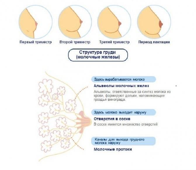 При каких заболеваниях повышено потоотделение (гипергидроз)