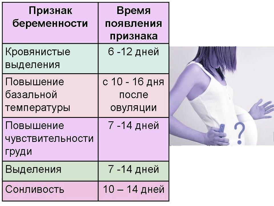 Можно ли по животу определить беременность