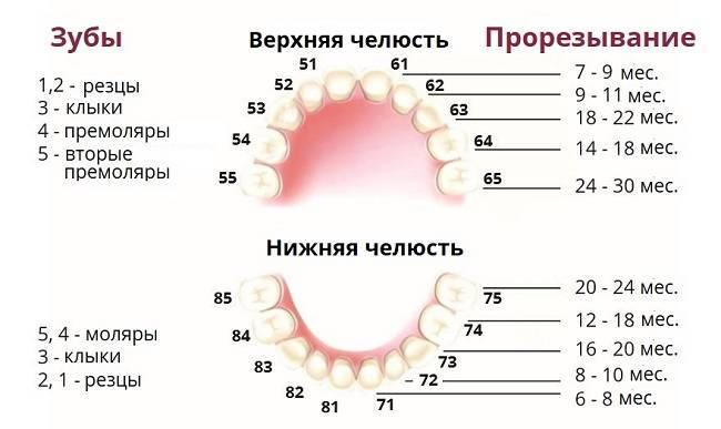 Как понять, что у младенца режутся зубки