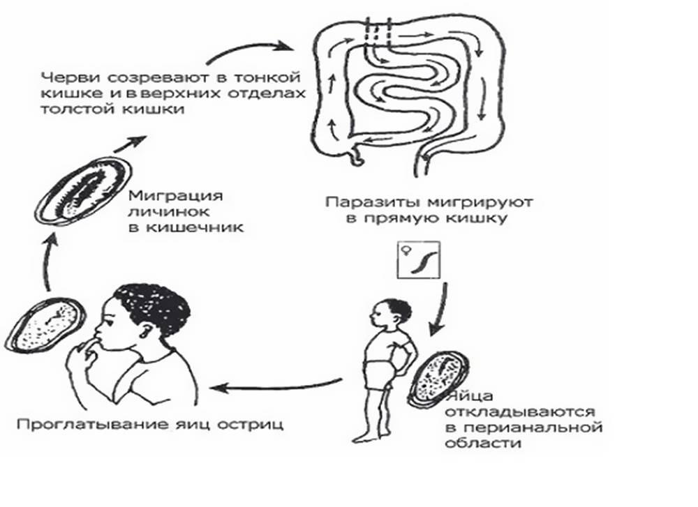 Глисты у детей - причины, симптомы и лечение гельминтоза. что делать, если у ребенка глисты?