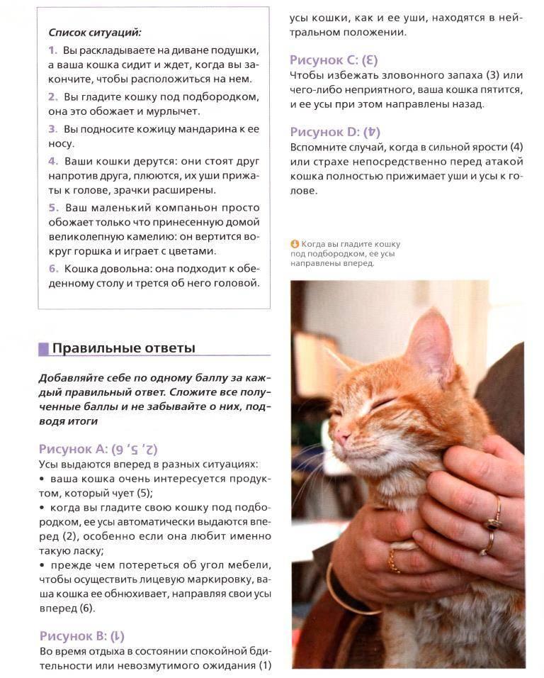 7 причин почему кошки мурлыкают когда их гладишь - kotiko.ru
