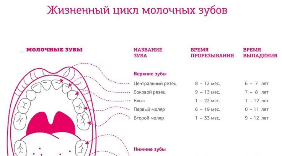 Статья о стоматологии: спасти, нельзя выдернуть: как сохранить молочные зубы здоровыми