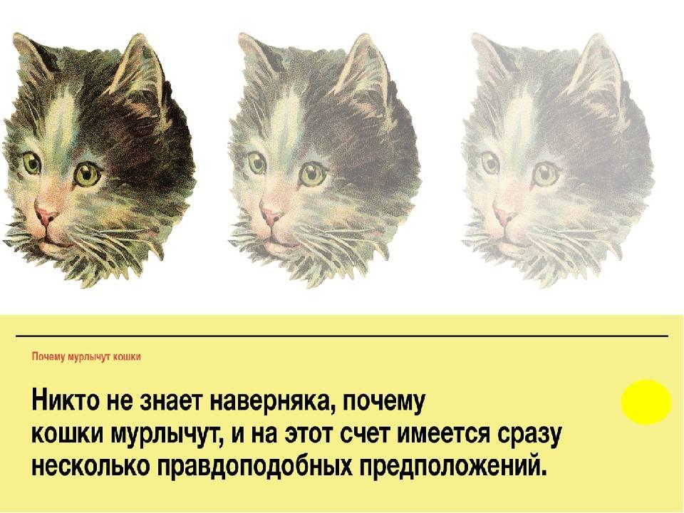 Почему кот не мурчит - причины и что это значит? - kotiko.ru