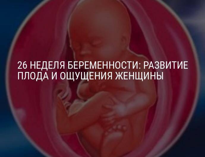 19 неделя беременности: что происходит на этой неделе?