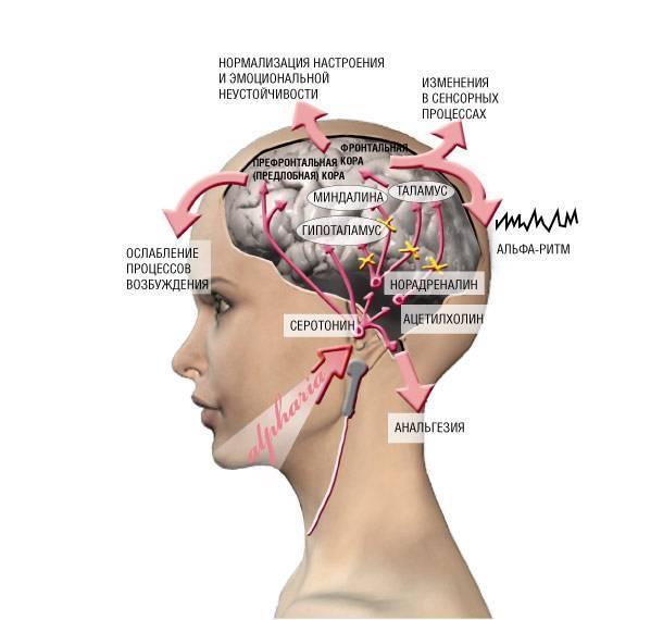 """Показания, противопоказания   микрополяризация головного мозга. """"индиго-мед"""""""