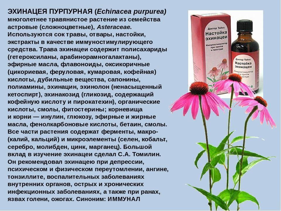 Эхинацеи настойка (echinaceae tinctura)