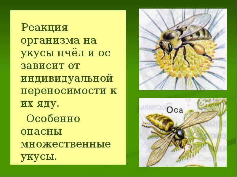 Первая помощь при укусах насекомых: как правильно оказать | food and health