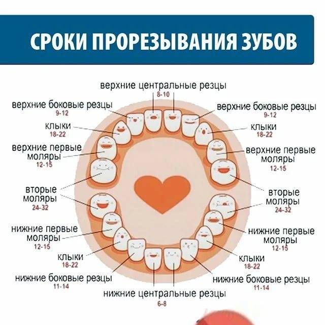 Зуб мудрости болит: что делать, как снять зубную боль. лечить или удалять зуб мудрости